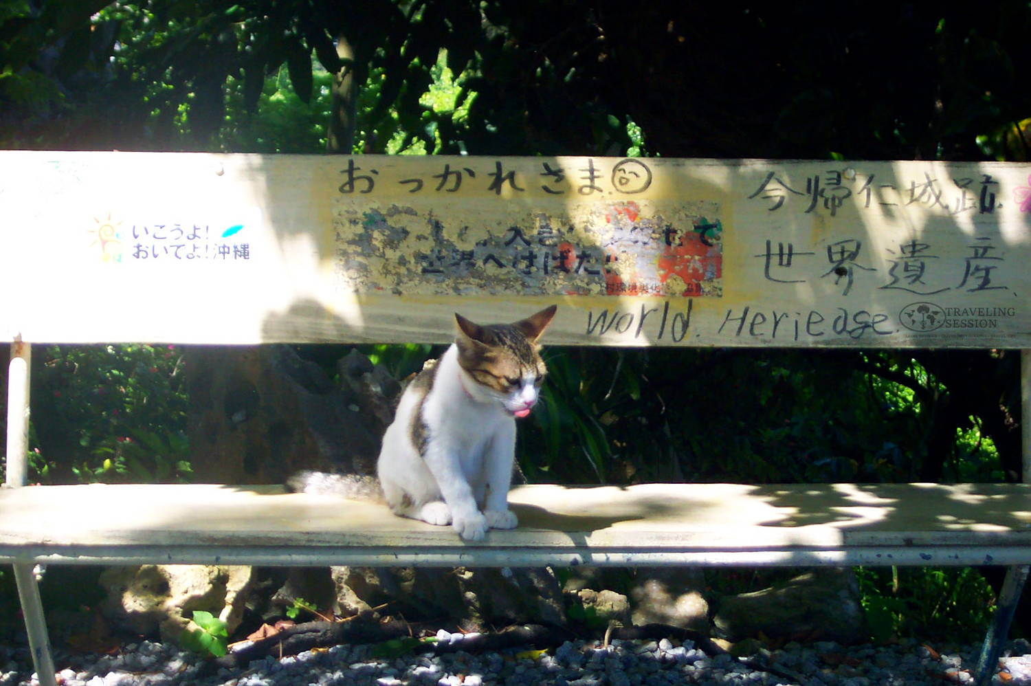 Okinawan Cat Sitting on a Bench