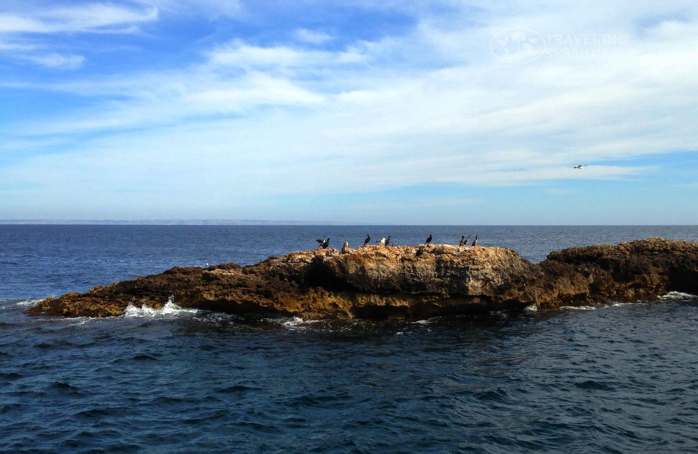 Mallorcan Birds