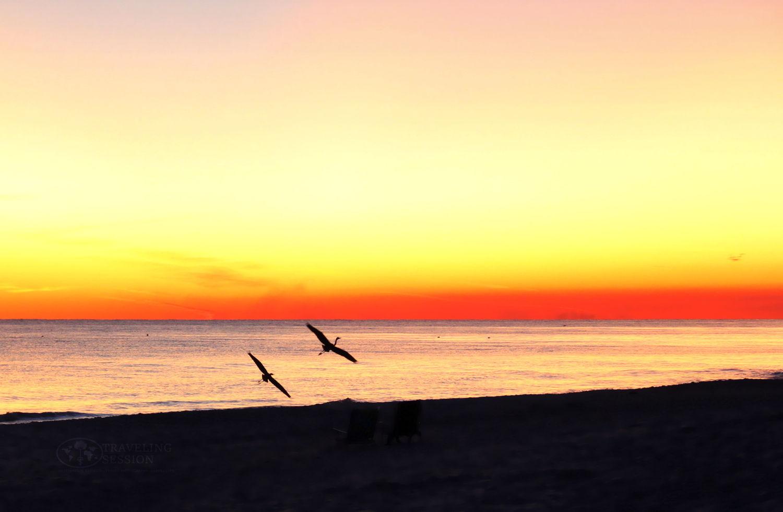 Okaloosa Island - Bird Silhouette