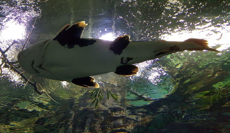 Lotte World Mall Aquarium
